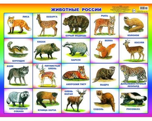 Плакат Животные России