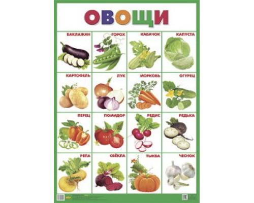 Плакат А2 Овощи